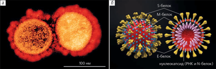 солнечная корона и коронавирус
